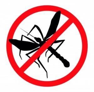 mosquito-300x294