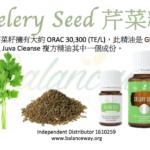 Celery Seed 芹菜籽