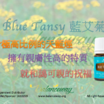 Blue Tansy 藍艾菊