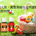復活節蛋與白兔