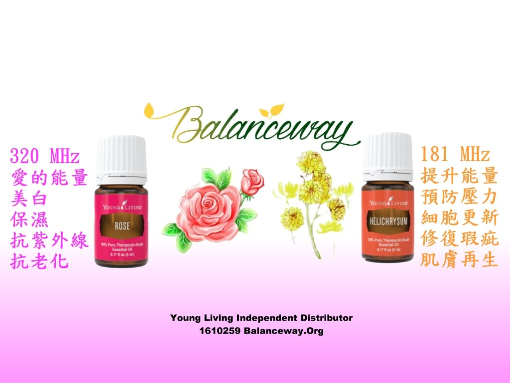 rose vs helichrysum